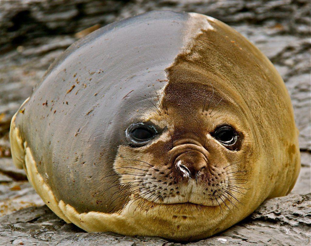 состав все о тюленях и их картинки системы